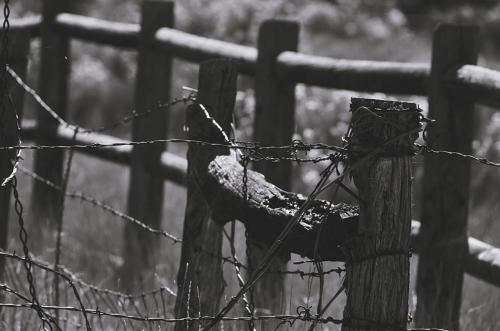 11-3-16 tangle of fences MMM E03 1920