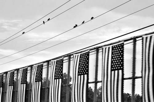 5.26.18 birds wires flags fence 1920
