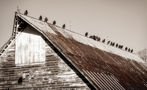 Barn-and-Vulture-Composition-1
