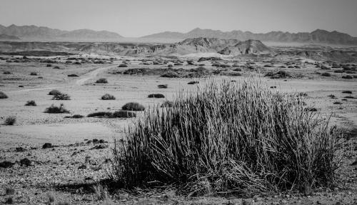 Barren_Namibia6