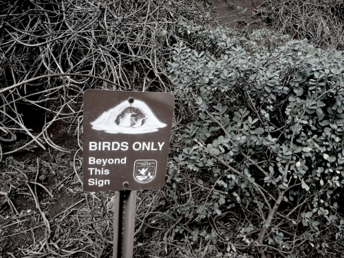 Birds-only