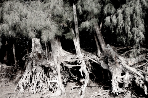Eroded-trees