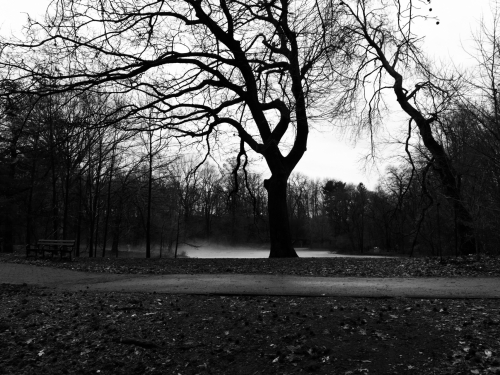 February in the Park (1)
