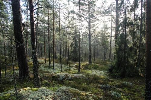 Finland5_IMG_2513B
