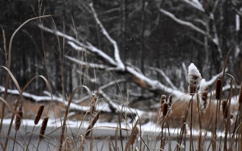 Moose Lake Flurries