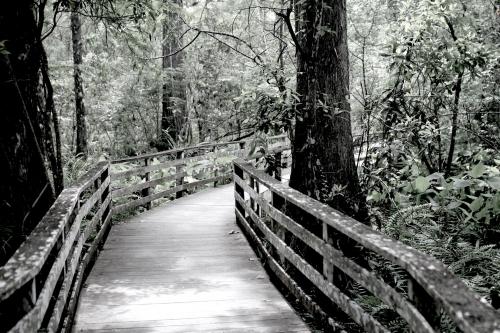 Swamp-boardwalk