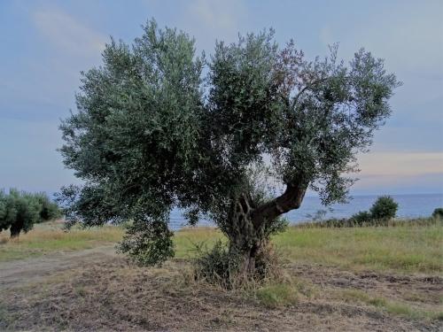 Trees 13