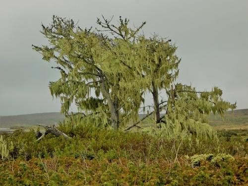 Trees 8