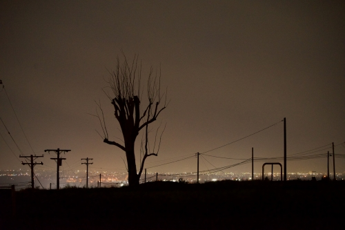 Winter_s Tree