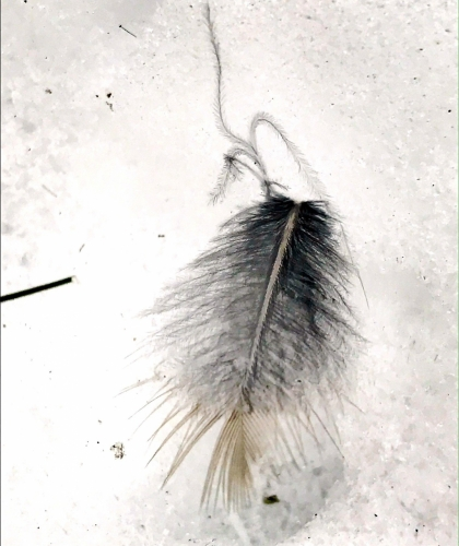 feather on snow