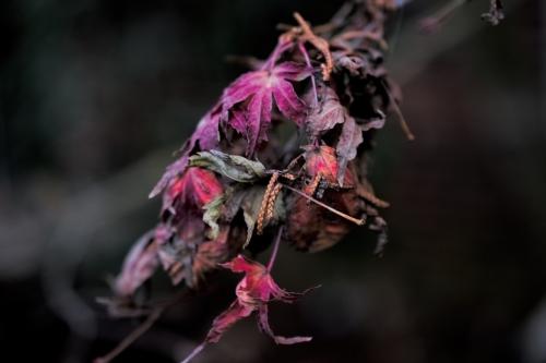 flashy death plants