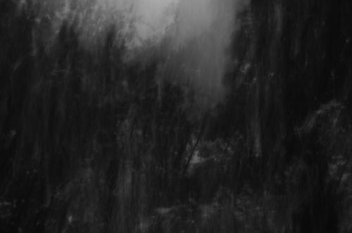 haunted woods